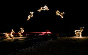Reindeer Lights